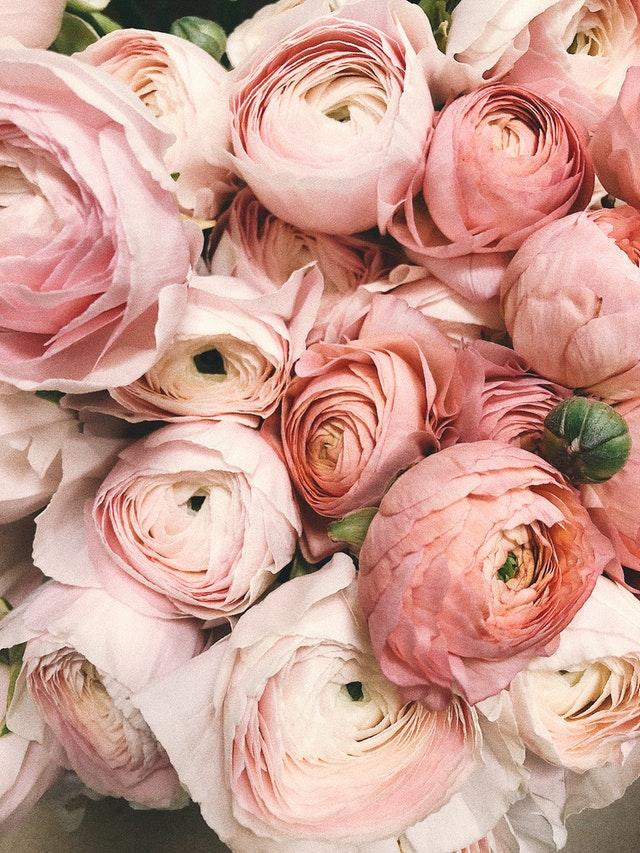 Roses de couleur rose